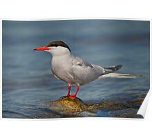 My tern to pose Poster