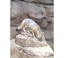 Lovely Fox Photographic Print