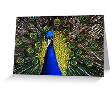 Peacock Showing Plumage - Full Colour digital image from Jenny Meehan   Greeting Card