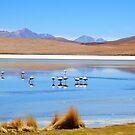 Flamingos - Salar Laguna amongst Volcanos, Uyuni by Honor Kyne