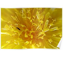 Little Ant on Yellow Wildflower Macro Poster