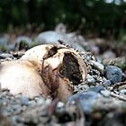 Yawning Mushroom by Tonee Christo
