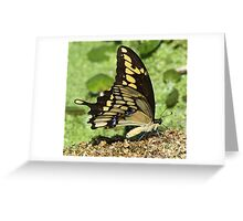 Eastern tiger swallowtail side-on Greeting Card