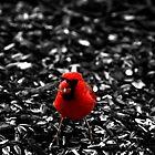 Cardinal by Christopher Hanke
