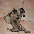 Pug Splits by v-something