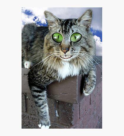 Cat On Crack Photographic Print