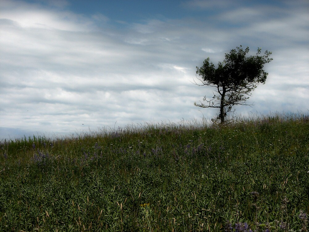 Weathering- Lone tree against the world by wespridgeon