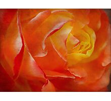 Passionate rose Photographic Print