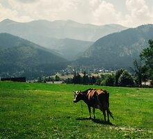 Brown Mountain Cow by PatiDesigns