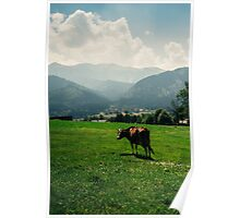 Brown Mountain Cow Poster