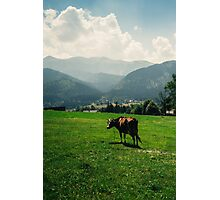 Brown Mountain Cow Photographic Print