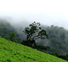 A tree highlighted by mist by Shiju Sugunan