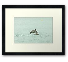 Dolphins playing leap frog Framed Print