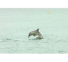 Dolphins playing leap frog Photographic Print
