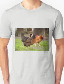 brown Rhode Island Red hens T-Shirt