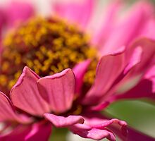 close up and personal by Teresa Pople