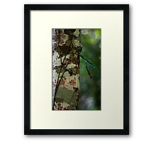 Lichen - Patterns & Colours Framed Print
