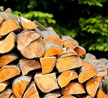 Fragments of alder logs  by Arletta Cwalina