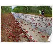 Red Crabs Migration At Drumsite Poster