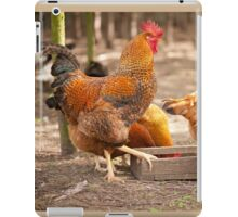 Young Rhode Island Red hens iPad Case/Skin