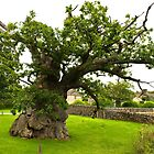 The Old Oak by John (Mike)  Dobson