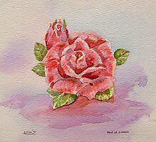 Rose of Summer Photographic Print