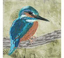 Watercolour Kingfisher bird  Photographic Print