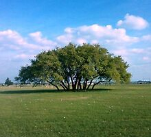 One magnificent set of trees by rubbleh