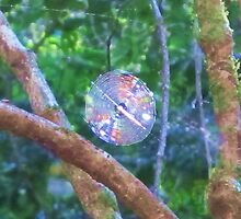 Colourful Cobweb by Michael Vickery