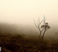Lone Tree, Cradle Mountain by Michael Bailey