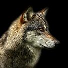 Portrait of The Wolf by Mark Hughes