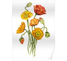 Bouquet of poppy flowers Poster