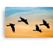Black Cockatoo sunrise Canvas Print
