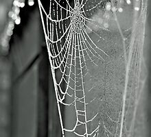 He learned that the world is like an enormous spider web ... by Gregoria  Gregoriou Crowe