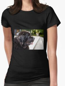 large black Newfoundland dog Womens Fitted T-Shirt