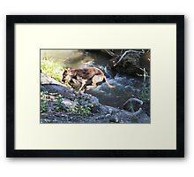 Leap Dog Framed Print