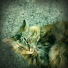 The neighbours kitty by Tibbs