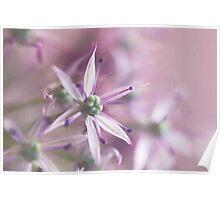 Allium pastels Poster