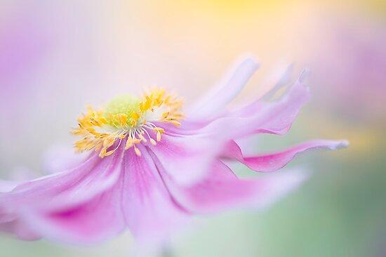 Anemone Float by Jacky Parker