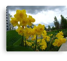 Daffy and Happy! Canvas Print