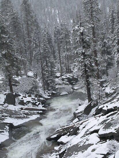 Redwoods Winter by fairbro1994
