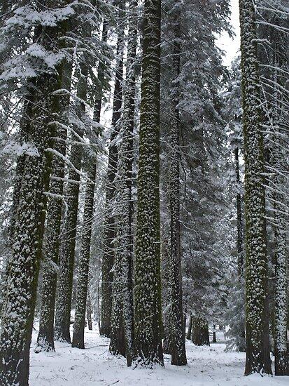 Trees by fairbro1994