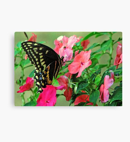 Butterflying Canvas Print