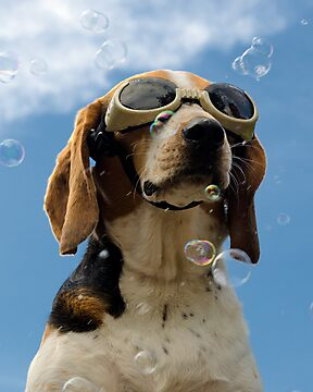 Hound amongst the bubbles by Darren Boucher