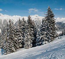 Austrian snowy trees by Frits Klijn (klijnfoto.nl)