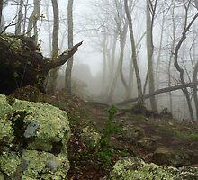 TLC - Foggy Forest by TLC1TLC