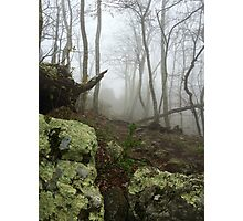 TLC - Foggy Forest Photographic Print