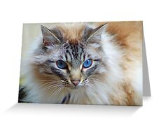 Blue eyed cat, France. Greeting Card