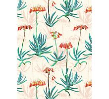 Flowering Succulent Pattern in Cream, Coral and Green Photographic Print