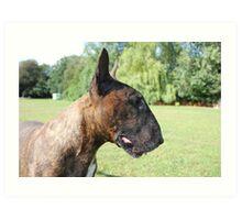 Kenny Bull Terrier Art Print